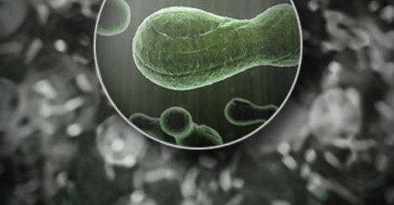 Microbioma: ¿es la bacteria responsable de tu acné?
